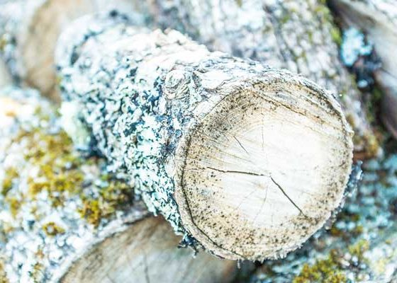Odeur de bois coupé