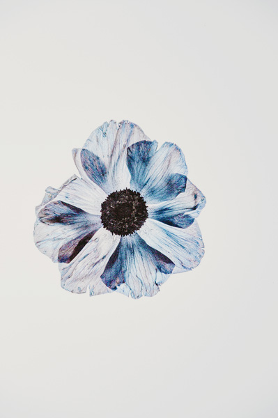 Fleur dessinée à l'aquarelle